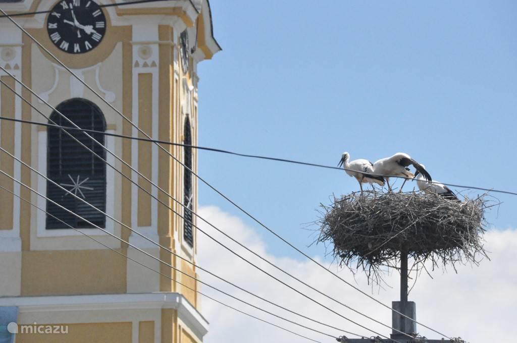 Kömlo met zijn mooie historische kerk en zijn dichtste buren de ooievaars.