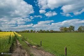 Koolzaad in een glooiend landschap, gelegen aan Maneweg, direct nabij het Boshuis.