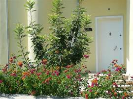 Rijke begroeiing bij de voordeur