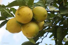 In de tuin staan heerlijke fruitbomen, met perziken, vijgen, blauwe en gele pruimen, amandelen en frisse citroenen.