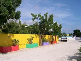 Luxus-Wohnung auf Bonaire. Zu Fuß zum Meer. Sehr ruhig, geräumig + komfortabel eingerichtet, Klimaanlage, Kabel-TV, voll ausgestattete Küche, private Terrasse + Sonnenterrasse, Grill, tropischen Garten.