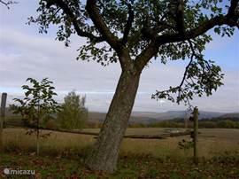 Mysterieus uitzicht omgeving Liesenich (3 km). Het lijkt of de tijd even stilstaat.