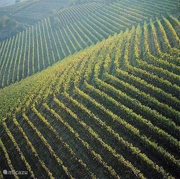 Wijnproeven en wijnboerderijen