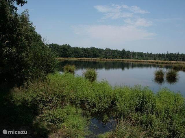 Natuurgebied haaksbergerveen