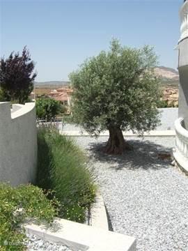 zijkant tuin