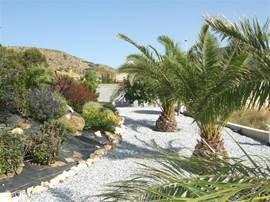 achterzijde tuin met palmen