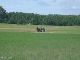 overlooking backyard. Regularly behind working with horse and wagon.