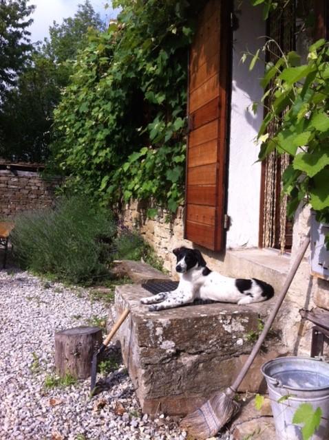 Hond mag mee! Nu wij zelf een hond hebben, stellen we het huis ook open voor andere honden. Echt genieten. Volop ruimte en wandelmogelijkheden.