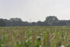 Uitzicht maisveld, volgende jaar kan er een ander gewas staan. 2010 is het een aardappelveld geworden.