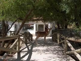 Tapade Mafra (natuurpark).