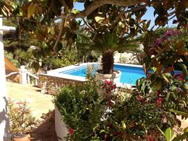 Mediterrane tuin met palmen, bougainville en andere prachtige beplanting