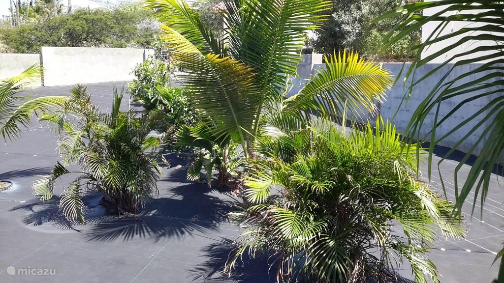 Tuinplanten