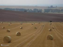 Prachtig uitzicht in de oogstmaand.