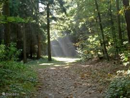het bos is naast de deur, lekker  wandelen. De Meeuwenplas en kikkerpoel bevinden zich hier ook. Elk jaargetijde heeft zijn eigen charme, genieten van de natuur en de vele reeën in het bos.