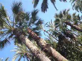 Palmentuin in Elche