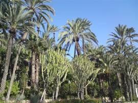 Palmentuin Elche