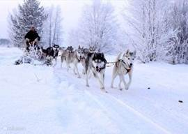 Husky safari in Sunne of Storfors