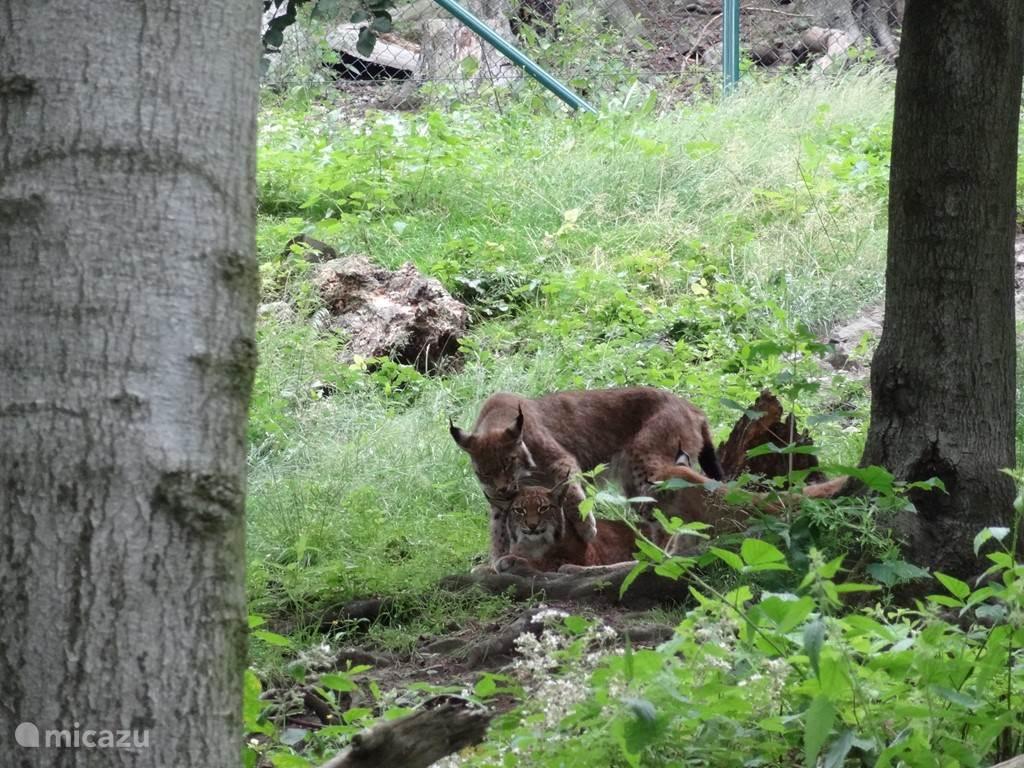 Natuur en Wildparken