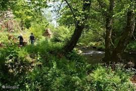 wandelen door de tuin met links de bief en rechts de rivier