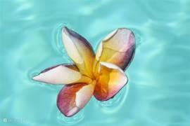 De bali bloem