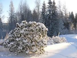 Uitzicht op de tuin in de winter