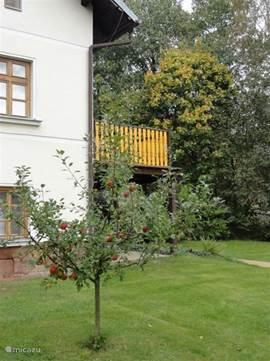 Fruitbomen in de tuin