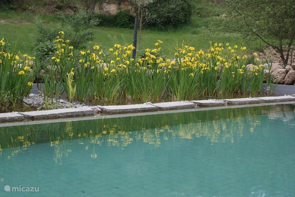 Kristalhelder en veilig zwemwater door natuurlijke filtering met stenen en planten.