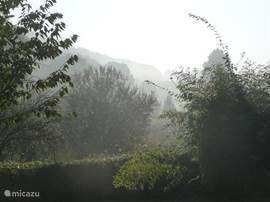 Zicht op het bos 's ochtends vroeg