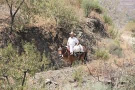 Op de wandelpaden in de directe omgeving van Casa Permira kun je deze man met muildier tegenkomen. Er zijn prachtige Mediterrane bomen, planten, bloemen en kruiden. Veel (roof)vogels en af en toe zie je een kameleon voorbij wandelen.