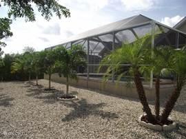De achtertuin is tropisch met palmen en witte kiezels. Om van te genieten vanuit het zwembad