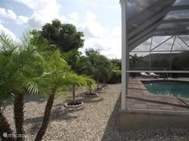 Uitzich op de palmen in de tropische tuin
