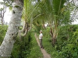 Franny loopt naar Ubud via het pad door de rijstvelden