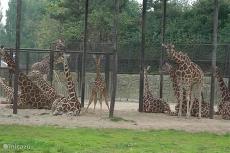 dierentuin in Dvur Kralové