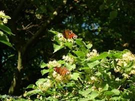 heel veel vlinders