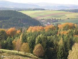 herfst met prachtige kleuren door de vele esdoorns