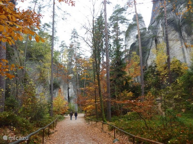 prachtige oude bomen en mooie herfsttinten