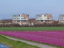 uitzicht in het voorjaar op de bloembollenvelden (foto genomen naar het complex toe)