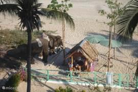 Olifanten aan het strand.