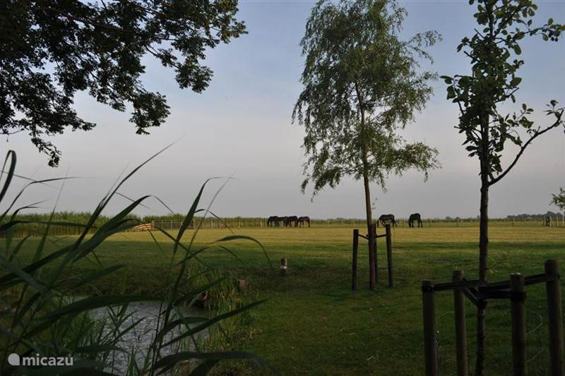Vakantiehuis Nederland, Friesland, Vrouwenparochie Appartement 'Romte'