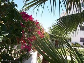 In de tuin bloeien de prachtigste planten.