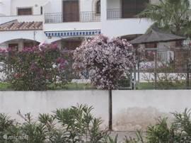 In de tuin en de omgeving staan eind februari al veel planten en amandelbomen in bloei.