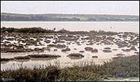 Uitzicht op de roze zoutmeren op 10 minuten lopen (om de hoek)van het appartement.  De twee zoutmeren van Torrevieja en La Mata en de omliggende gebieden zijn beschermd natuurgebied.  Laguna Salida de la Mata is tot vogelnatuurgebied verklaard. Hier vindt u ook de grootste zoutmeren van Europa.