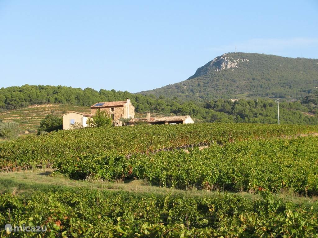 uitzicht op een boerderij wederom tussen de druiven struiken
