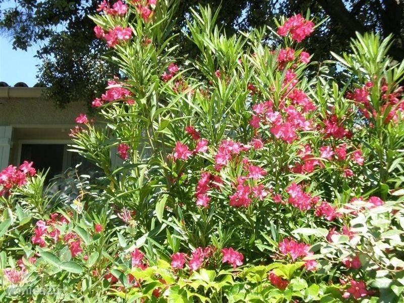 Vakantiehuis Frankrijk, Provence, La Roque-Alric Bungalow Le Cygne