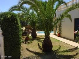 Wuivende palmbomen en aan alle zijden van de villa heerlijke plekjes.