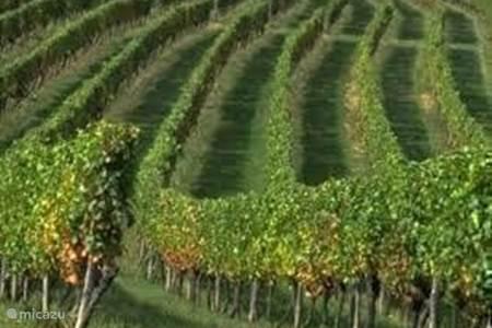 Eigen Wijnkelder