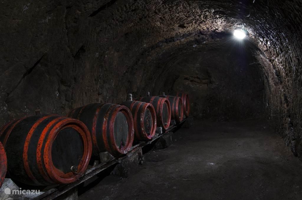 Eigen Wijnkelder van Kasteel Žemberovce. In bepaalde periode's kan de wijnkelder gesloten zijn.