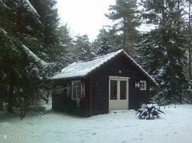 Goudhaantje in de sneeuw.