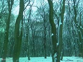 Het Vierhouten bos in de sneeuw.