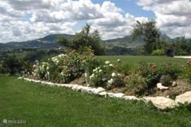 Een gedeelte van de tuin met bloeiende rozenstruiken.
